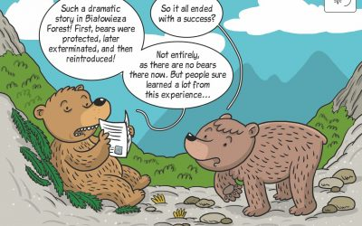 Science cartoon on the history of brown bear in Białowieża Forest
