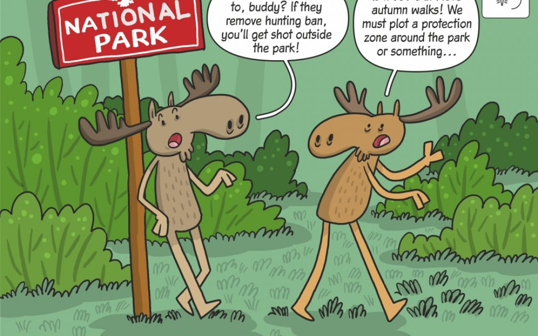 Science cartoon on the impact of renewed hunting on moose inhabiting national parks