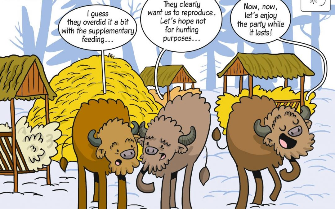 Science cartoon about European bison management in XIX century