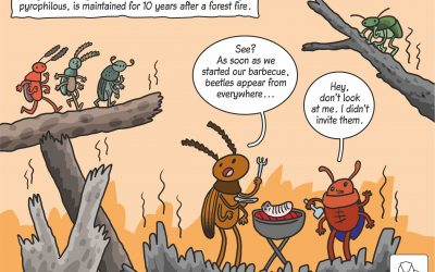 08.04.2020 – Science cartoon on post-fire beetle succession