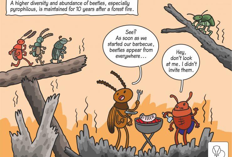 08.04.2020 – Science cartoon on post-fire beetle succession