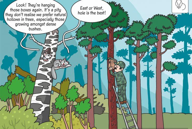 19.05.2020 – Edible dormouse prefers natural cavities!