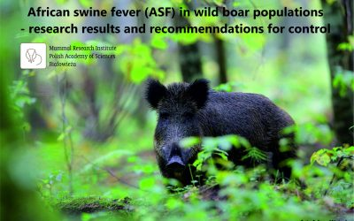 01.09.2020 – Report on African Swine Fever in wild boar populations