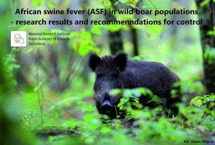 01.09.2020 – Report on African Swine Fever in wild boar populations