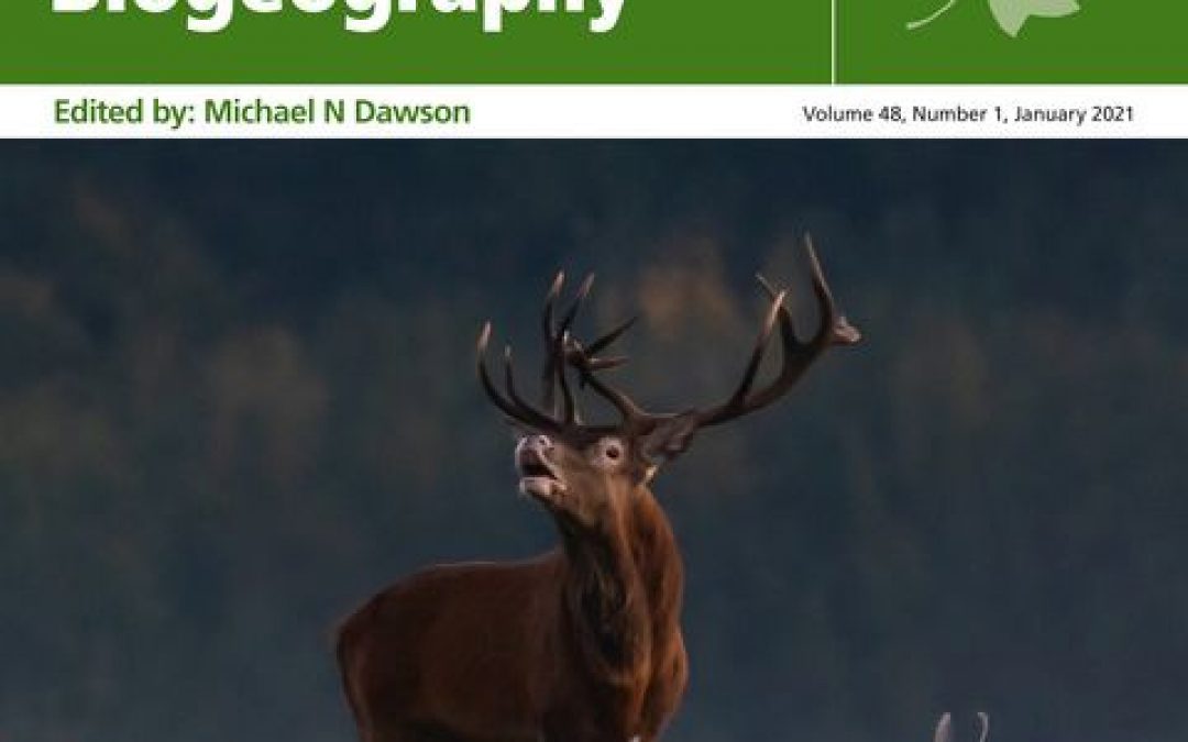 18.01.2021 – Red deer from the Białowieża forest on the Journal of Biogeography cover