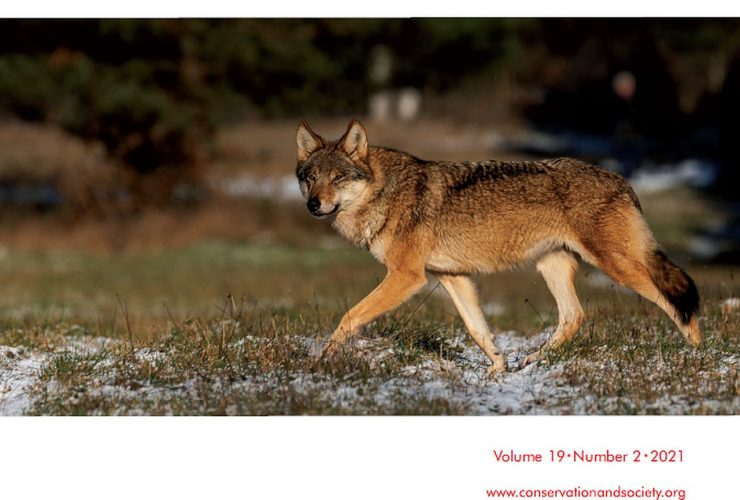 17.06.2021 – Wolf from Białowieża Forest on the cover of the journal Conservation & Society