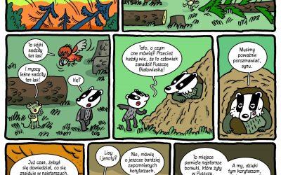 Komiks o historii Puszczy Białowieskiej z perspektywy… borsuków
