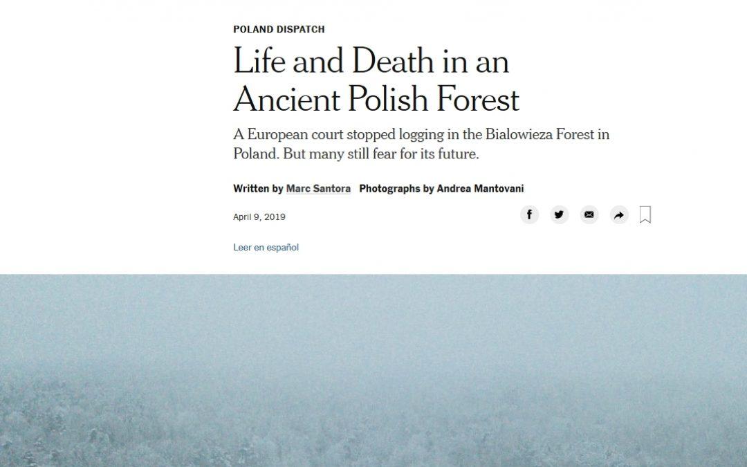 New York Times o Puszczy Białowieskiej