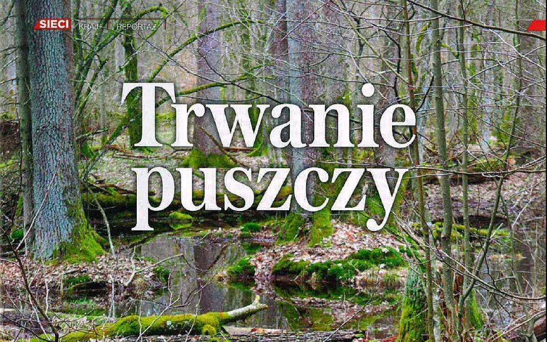 Tygodnik Sieci o Puszczy Białowieskiej.