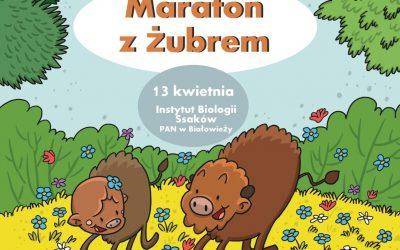 Maraton z żubrem w IBS