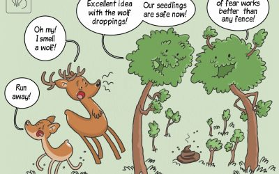 Najnowsze odkrycia IBS PAN w formie komiksowej