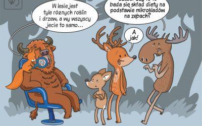 Dieta ssaków kopytnych w Puszczy Białowieskiej w komiksowym skrócie