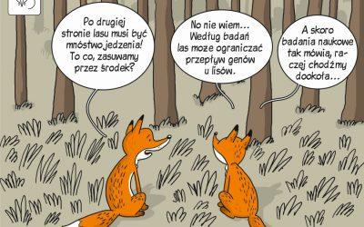 Komiks poświęcony badaniom zmienności genetycznej w populacjach lisa