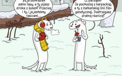 Komiks naukowy o genetyce łasic