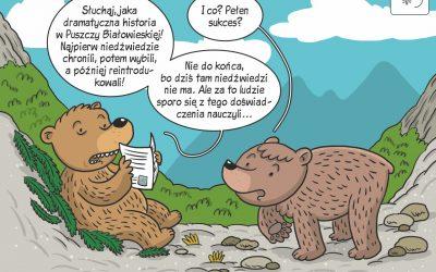 Komiks naukowy o historii niedźwiedzia w Puszczy Białowieskiej