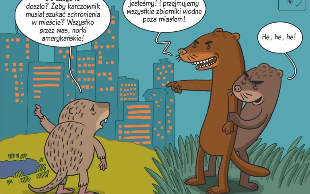 Komiks naukowy o użytkowaniu środowisk przez karczownika – rodzimy gatunek i norkę amerykańską – obcy, inwazyjny gatunek ssaka drapieżnego