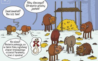Najnowszy komiks naukowy IBS PAN o zarażeniu żubrów krwiopijnym nicieniem.