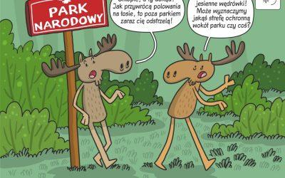 Komiks naukowy o potencjalnym wpływie polowań na łosie w parkach narodowych
