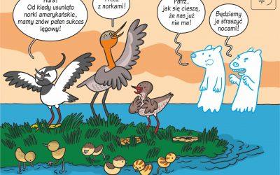 Komiks naukowy o wpływie usuwania norki amerykańskiej na sukces lęgowy ptaków wodnych