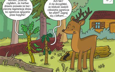 Uwolnienie odnowienia drzew od zgryzania przez ssaki kopytne