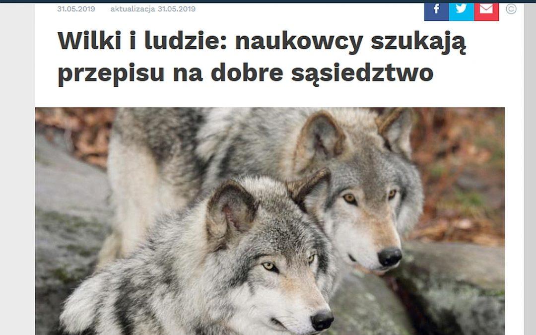 Nauka w Polsce o badaniach IBS PAN nad wilkami