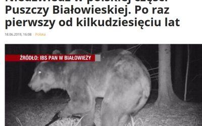 18.06.2019 Media o niedźwiedziu w Puszczy Białowieskiej