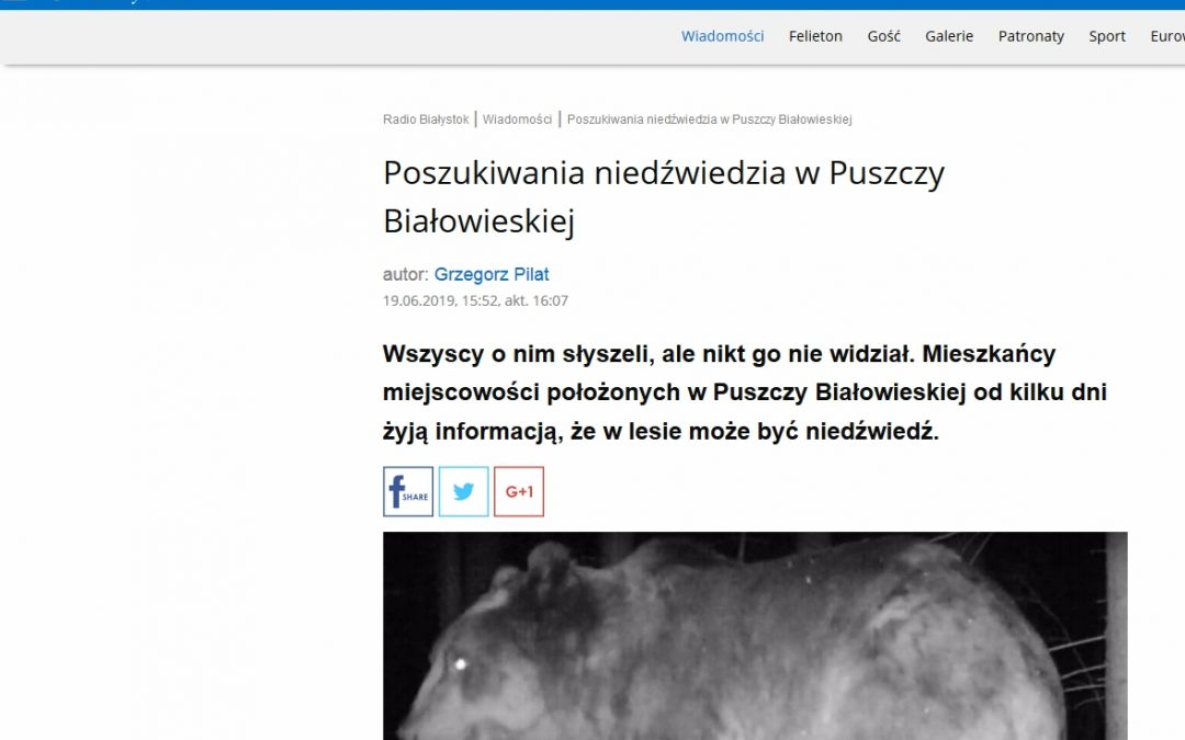 19.06.2019 Radio Białystok o niedźwiedziu w Puszczy Białowieskiej