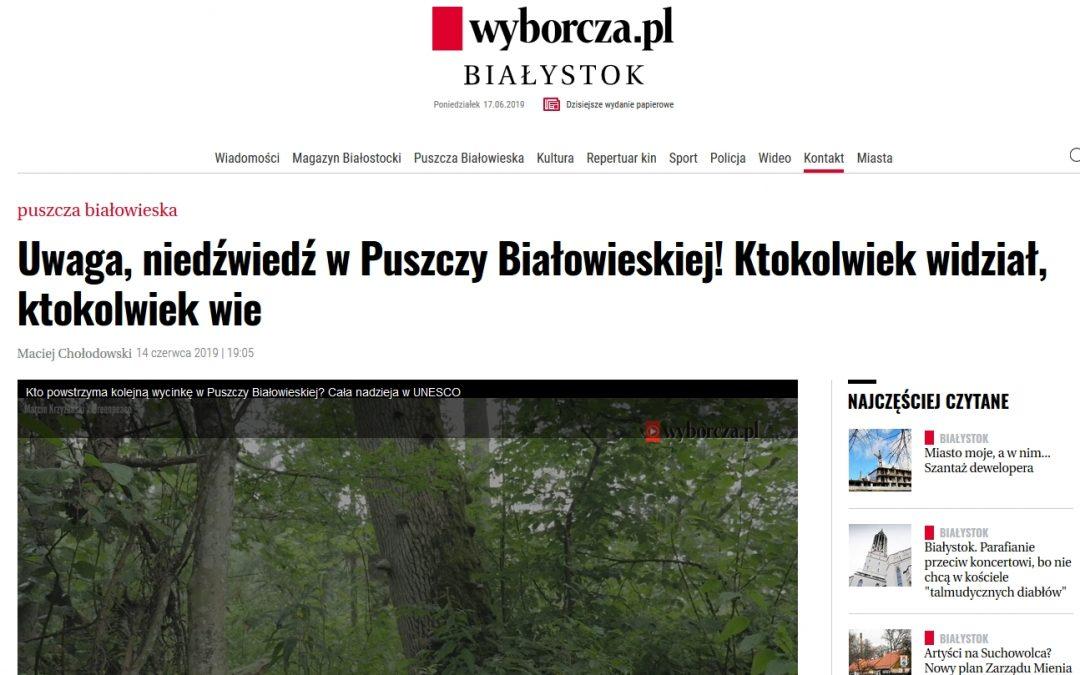 14.06.2019 Wyborcza o niedźwiedziu w Puszczy Białowieskiej