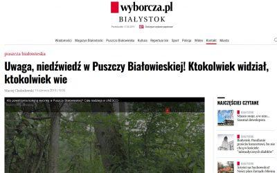 14.09.2019 Wyborcza o niedźwiedziu w Puszczy Białowieskiej