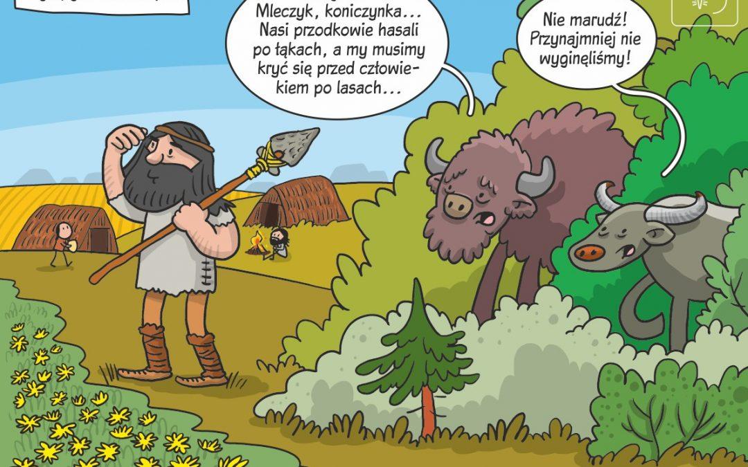 Komiks naukowy o użytkowaniu środowisk przez dużych roślinożerców w holocenie