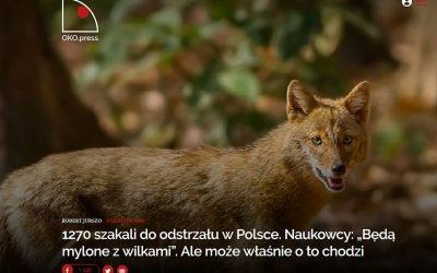 09.08.2019 OKO.press o polowaniach na szakale złociste