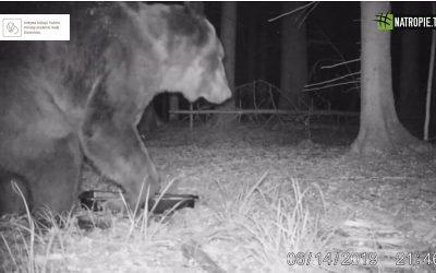 04.08.2019 – #na Tropie o niedźwiedziu w Puszczy Białowieskiej