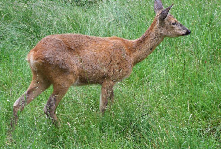 13.02.2020 Ochrona zwierząt w parkach narodowych Europy wymaga poprawy