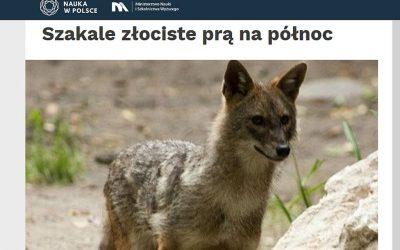 12.02.2020 – Nauka w Polsce o rozrodzie szakali