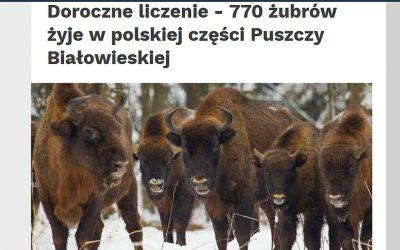 10.03.2020 – Policzono żubry w Puszczy Białowieskiej
