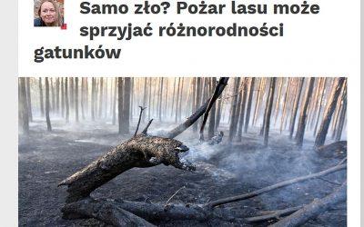 03.03.2020 – Pożar lasu może sprzyjać różnorodności biologicznej