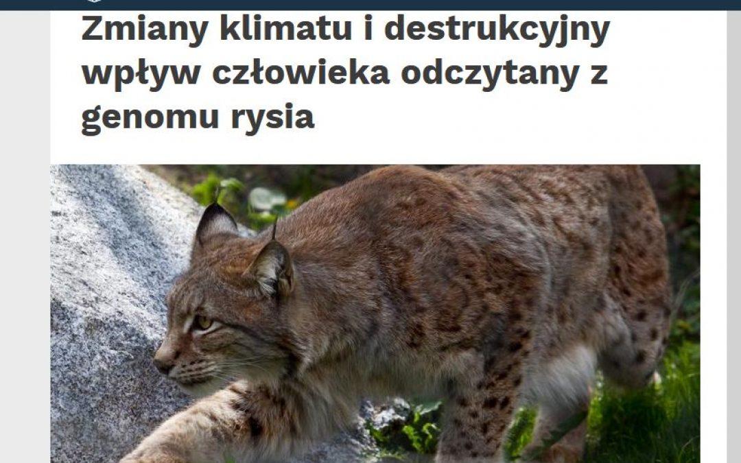 04.03.2020 Nauka w Polsce o dramatycznie niskiej zmienności genomu rysia