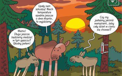 30.04.2020 – Komiks naukowy o wpływie upałów na zachowanie łosi!