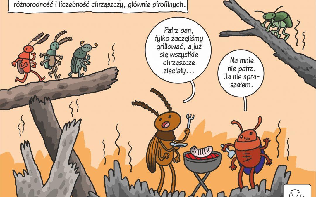 08.04.2020 – Komiks naukowy o chrząszczach na pożarzysku