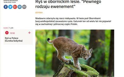 12.06.2020 O biologii rysia w Polskim Radiu