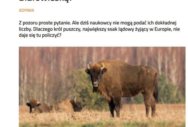 13.07.2020 – O żubrach w Polskim Radiu