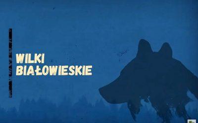 05.11.2020 – Białowieskie wilki