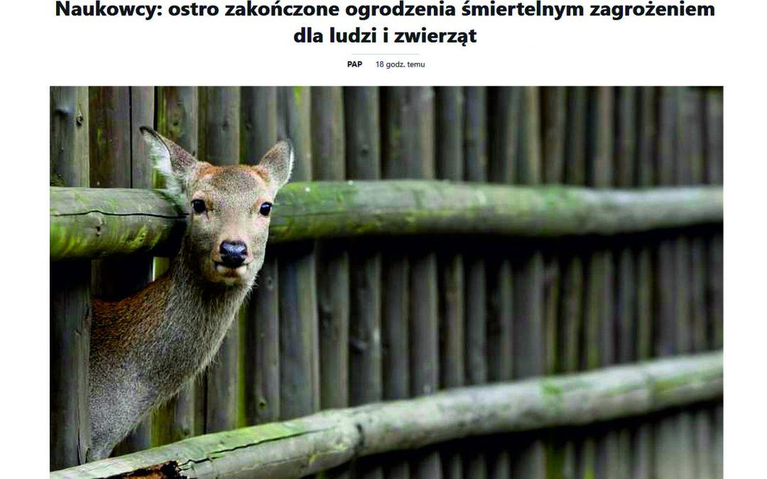 16.11.2020 – Ostro zakończone ogrodzenia śmiertelnym zagrożeniem dla łosi