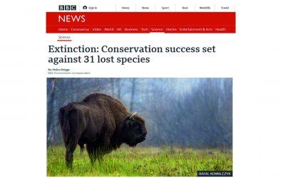 11.12.2020 – BBC News o sukcesie ochrony żubra!