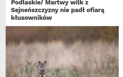 16.12.2020 – Wyniki badania martwych wilków z płn-wsch. Polski