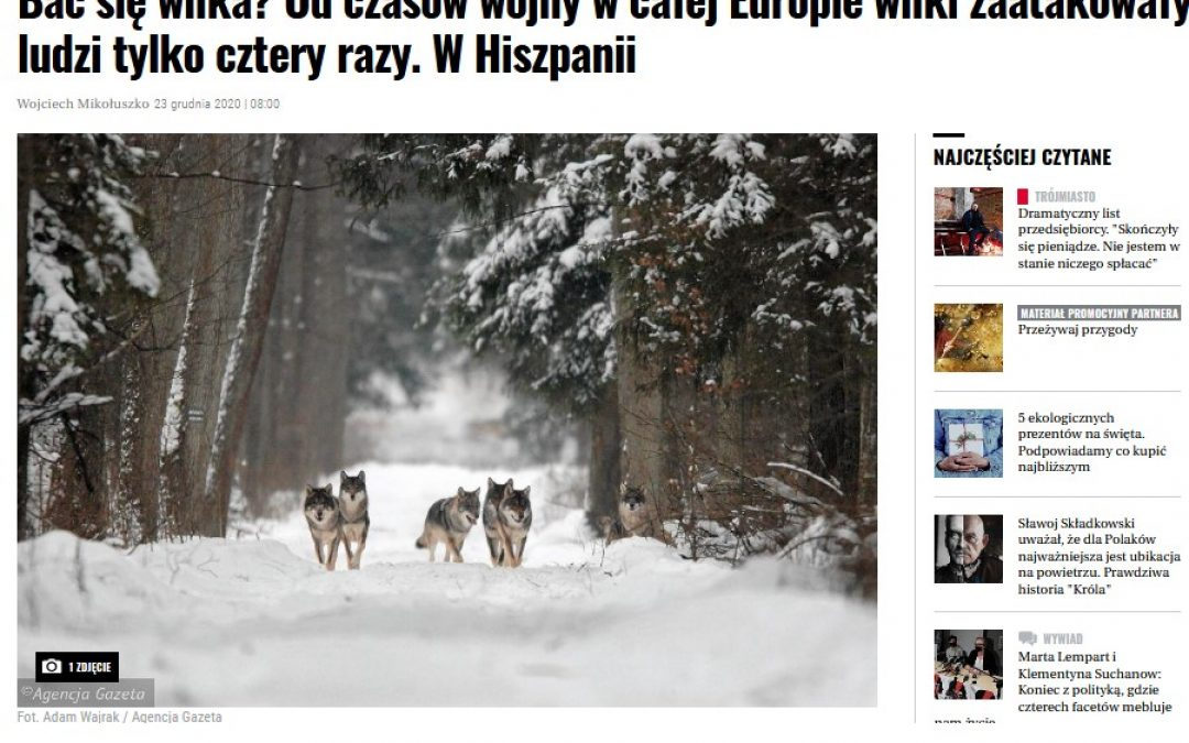 23.12.2020 Czy należy bać się wilków? Czy należy bać się wilków?