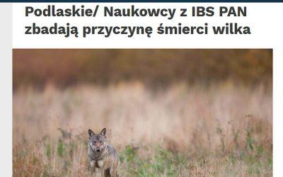 09.12.2020 – Naukowcy z IBS PAN zbadają przyczynę śmierci wilka