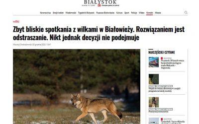 30.12.2020 – Wilk w Białowieży