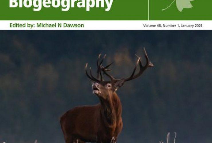 18.01.2021 – Białowieski jeleń na okładce Journal of Biogeography