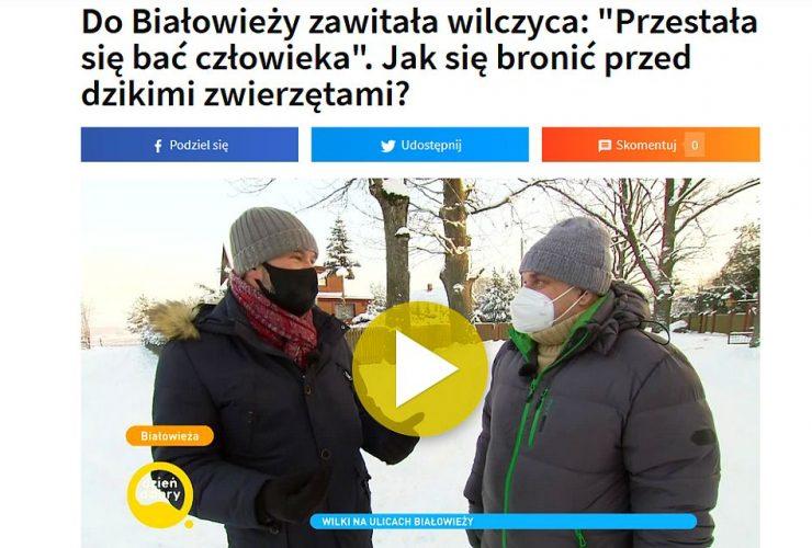 16.01.2021 – O wilku w Białowieży w Dzień Dobry TVN